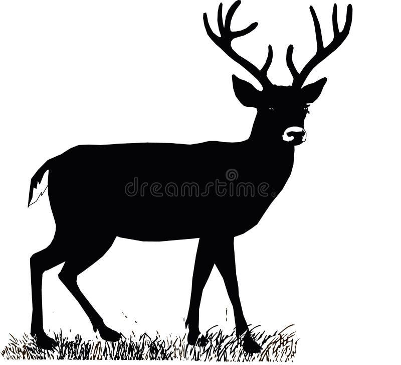 美丽的高尚的骄傲的sika鹿是在家庭Cervidae的反刍动物哺乳动物 侧视图 皇族释放例证