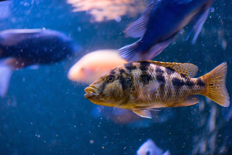 美丽的鱼人群在水族馆的 免版税库存图片