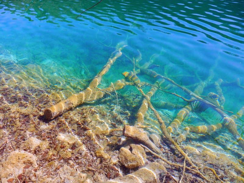 美丽的鲜绿色湖 库存照片