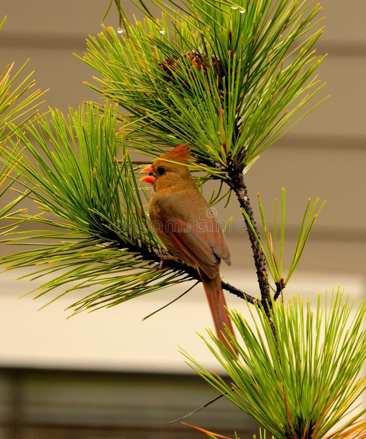 美丽的鸟坐分支 库存照片