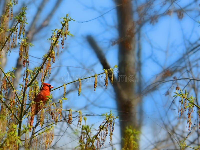 美丽的鸟坐树枝 免版税库存图片