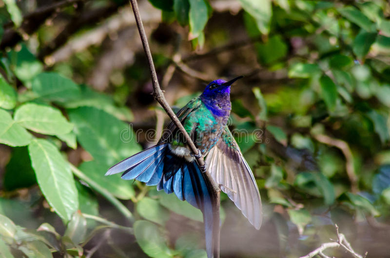 美丽的鸟 库存图片