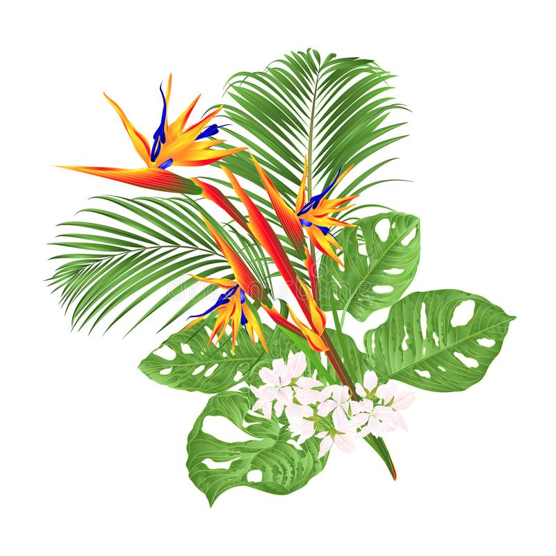 美丽的鹤望兰reginae热带花和monstera和棕榈在编辑可能白色背景葡萄酒传染媒介的例证 库存例证