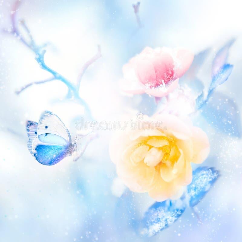 美丽的黄色和桃红色玫瑰和蓝色蝴蝶在雪和霜艺术性的五颜六色的冬天自然图象 免版税库存照片
