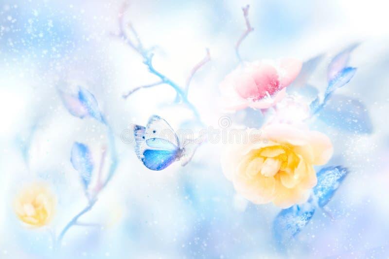 美丽的黄色和桃红色玫瑰和蓝色蝴蝶在雪和霜艺术性的五颜六色的冬天自然图象 库存照片
