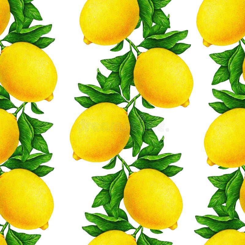 美丽的黄色柠檬的巨大例证在与在白色背景隔绝的绿色叶子的一个分支结果实 无缝的模式 皇族释放例证