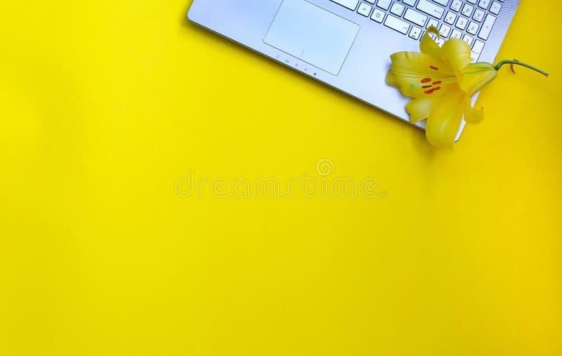 美丽的黄色百合花和一台膝上型计算机在黄色背景 花最小的概念 最小的夏天概念 查出 Beautifu 免版税图库摄影