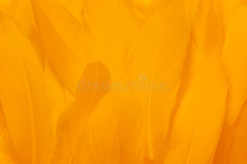 美丽的黄色羽毛特写镜头  上色背景 库存照片