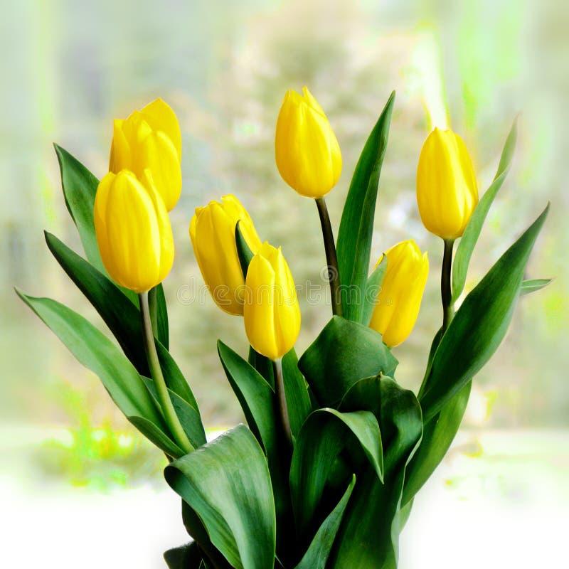 美丽的黄色郁金香花束 库存照片