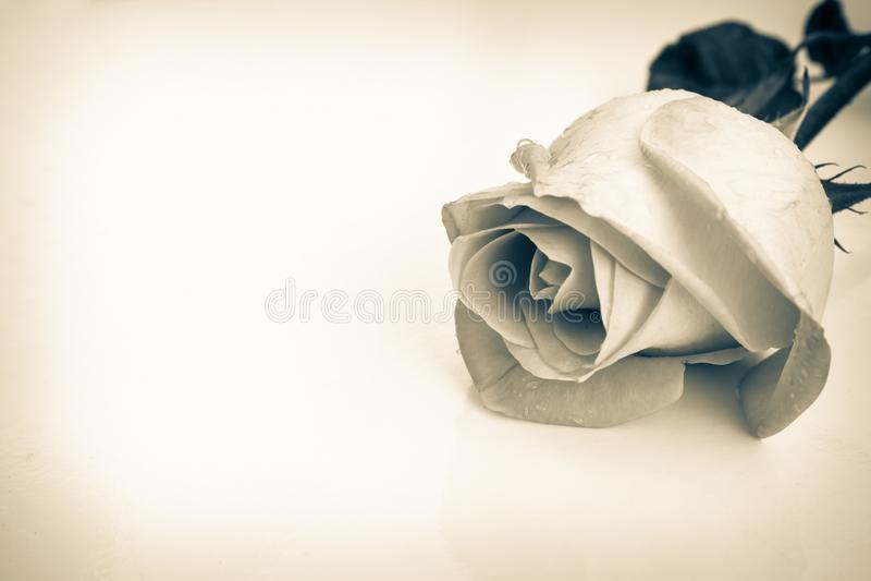 美丽的黑白玫瑰,与水下落的鲜花,能使用作为婚姻的背景 减速火箭的样式 免版税库存图片