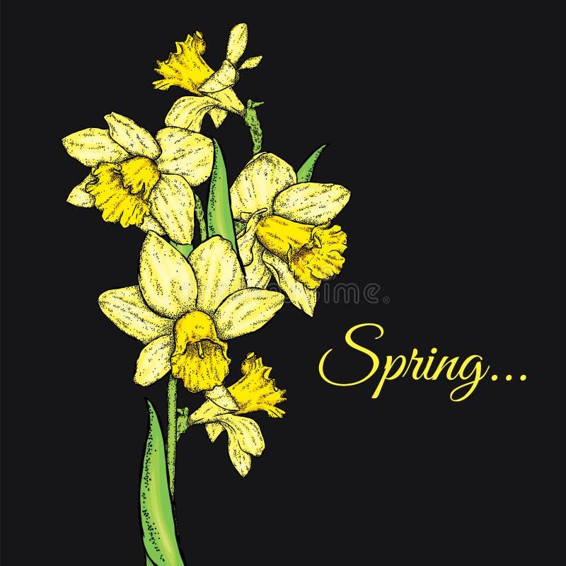 美丽的黄水仙 也corel凹道例证向量 花束开花弹簧 库存例证