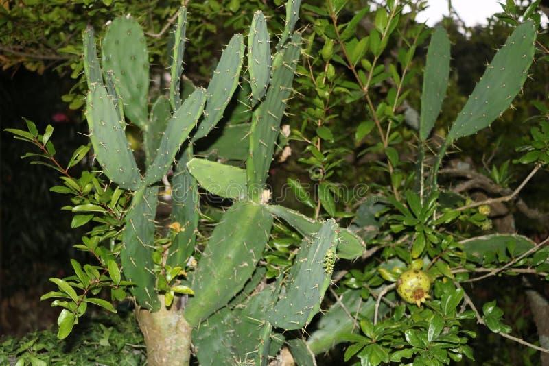 美丽的仙人掌野生植物和花 免版税库存照片