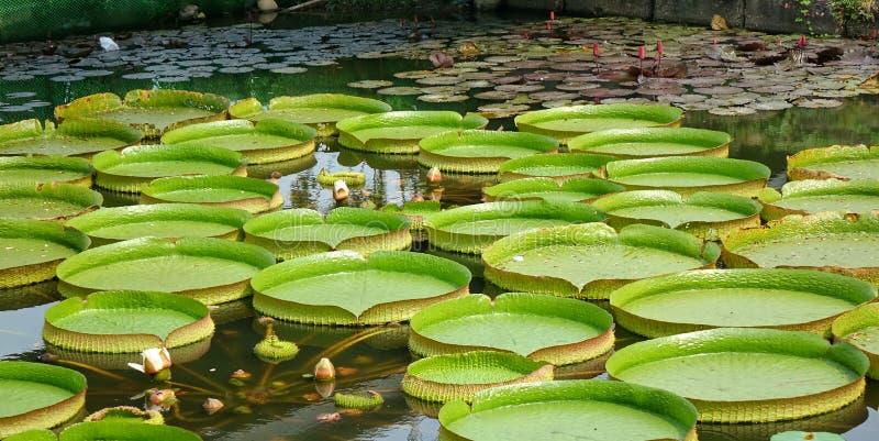 美丽的维多利亚水盛肉盘和花 库存图片