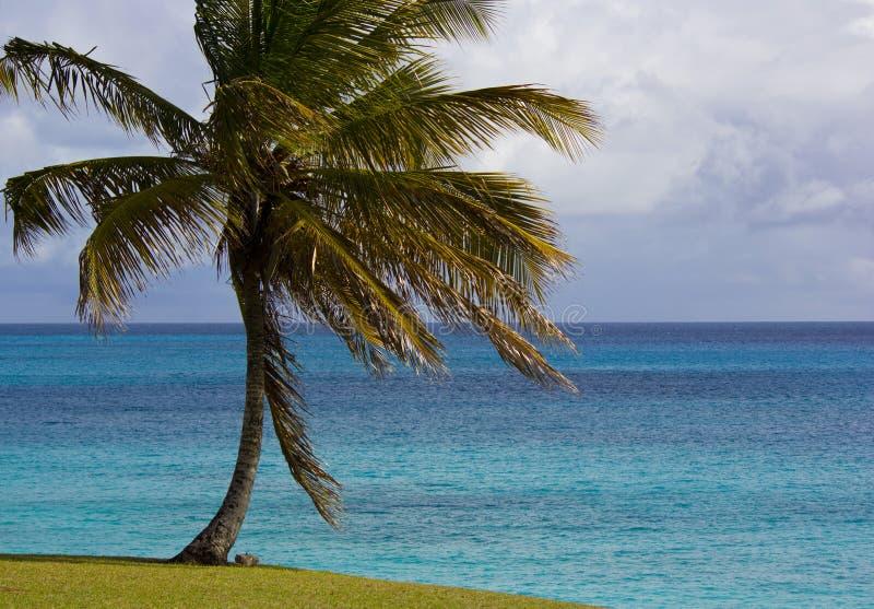 美丽的晴朗的巴巴多斯的海景 库存照片