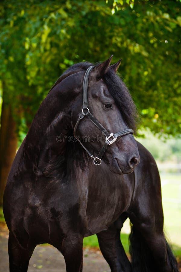 美丽的黑白花的马画象 免版税库存照片