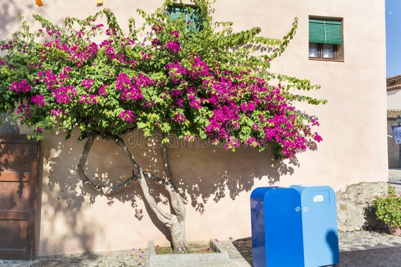 美丽的紫罗兰色九重葛回归线树 库存照片