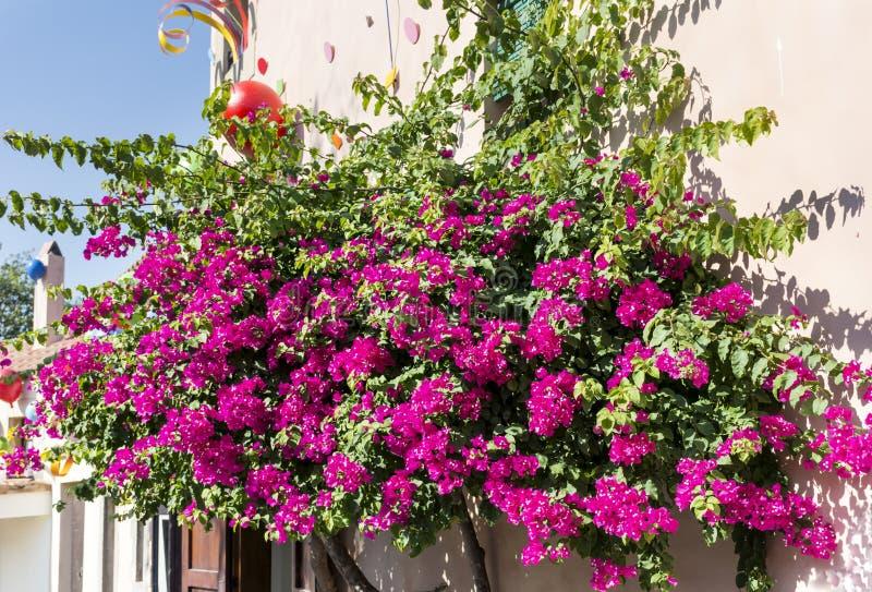 美丽的紫罗兰色九重葛回归线树 免版税库存照片