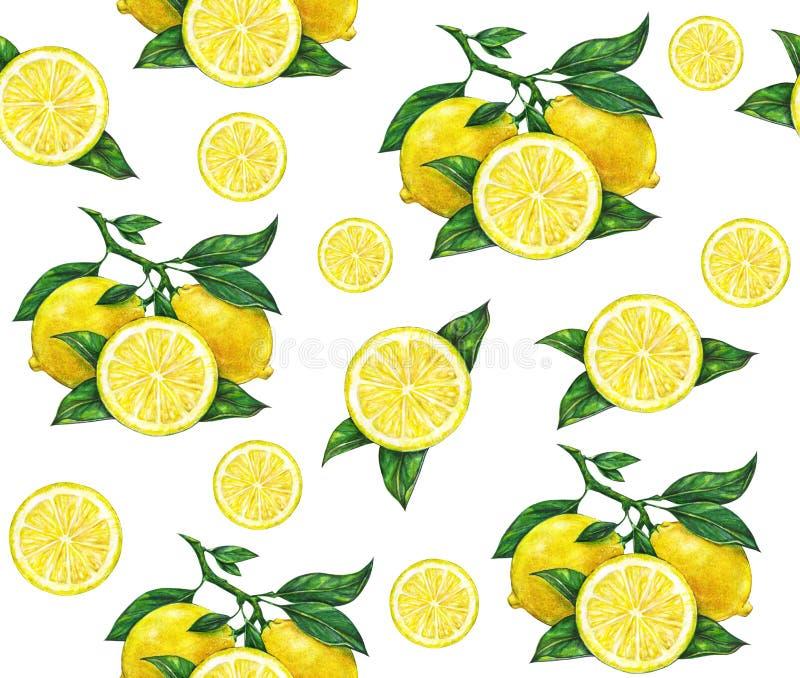 美丽的黄色柠檬的巨大例证在白色背景结果实 柠檬水彩图画  无缝的模式 皇族释放例证