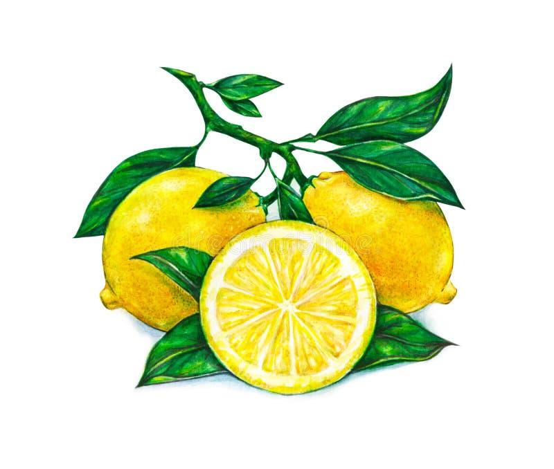 美丽的黄色柠檬的巨大例证在白色背景结果实 柠檬水彩图画  皇族释放例证