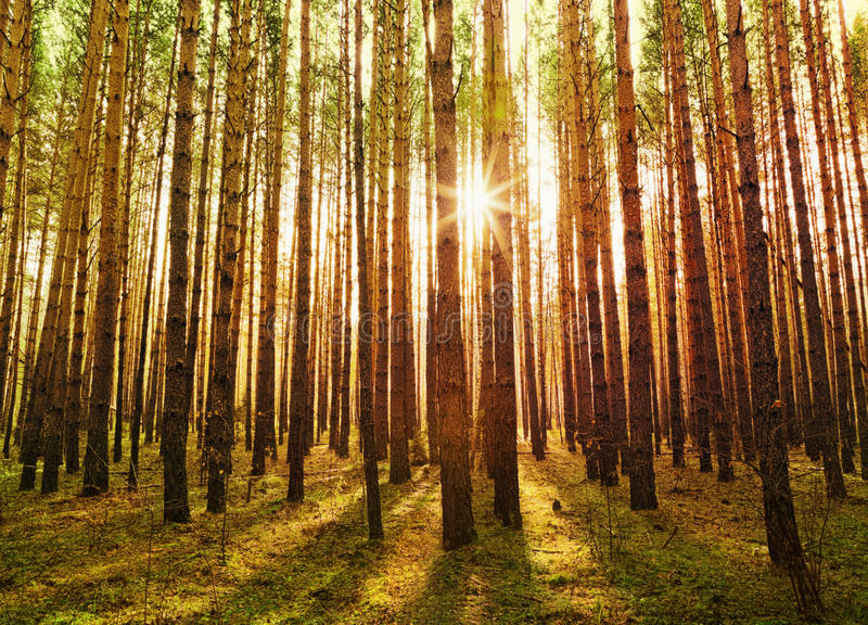 Download 美丽的绿色森林 库存照片. 图片 包括有 季节, 结构树, 赐福, 杉木, 旅游业, 自治权, 本质, 农村 - 30330532