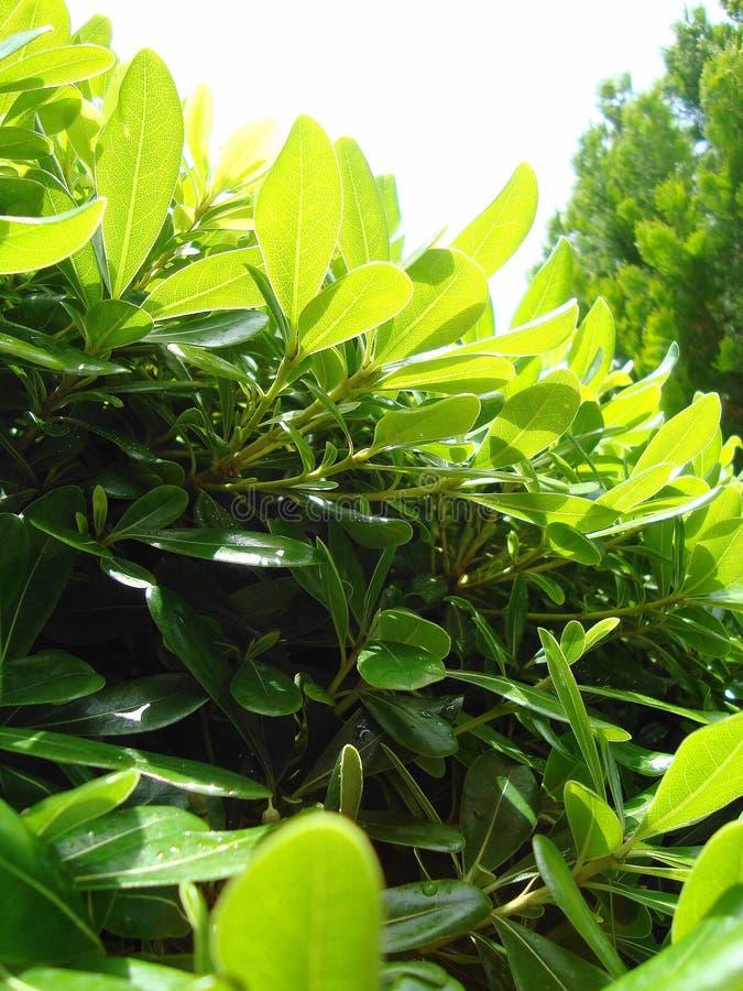 美丽的绿色花在绿洲 免版税库存照片