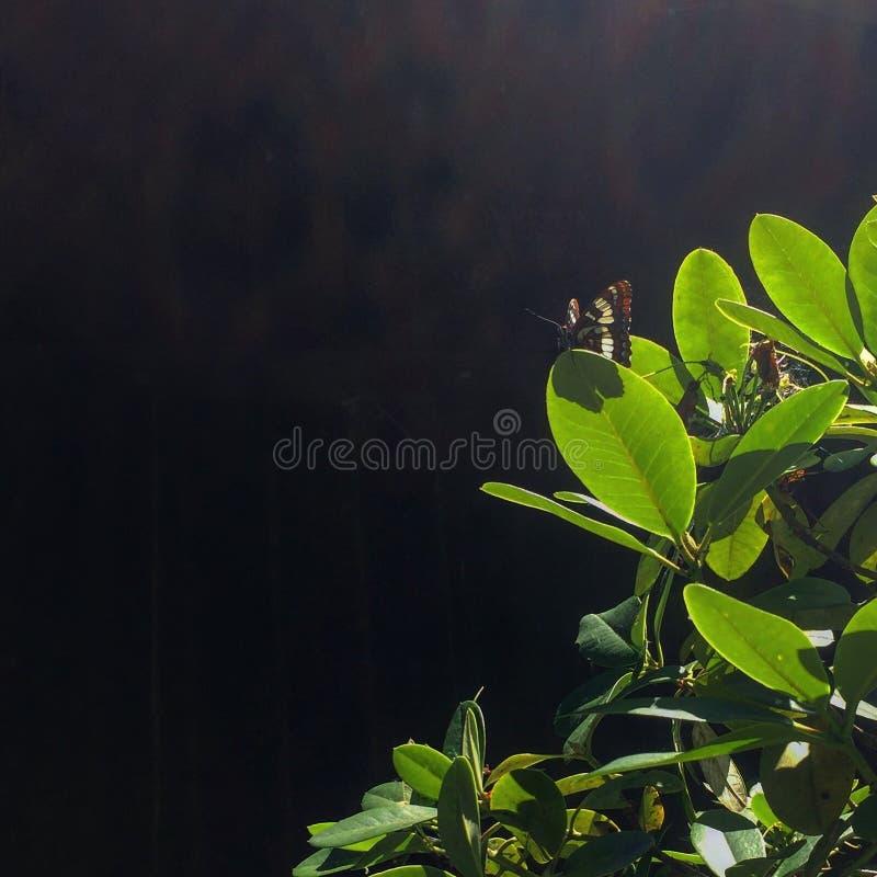 美丽的蝴蝶 库存照片