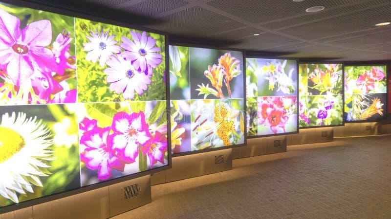 美丽的futurustic花在花圆顶庭院里生动描述陈列 免版税库存图片