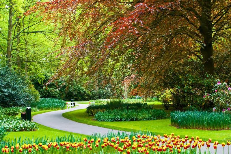 美丽的Keukenhof春天庭院 库存照片