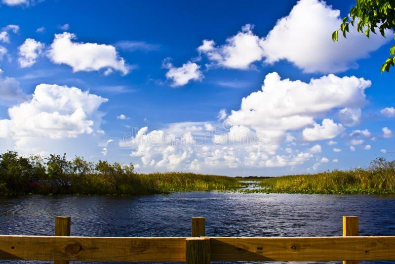美丽的tamiami足迹 免版税库存图片