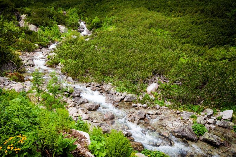 美丽的Tatry山风景五湖谷 库存图片