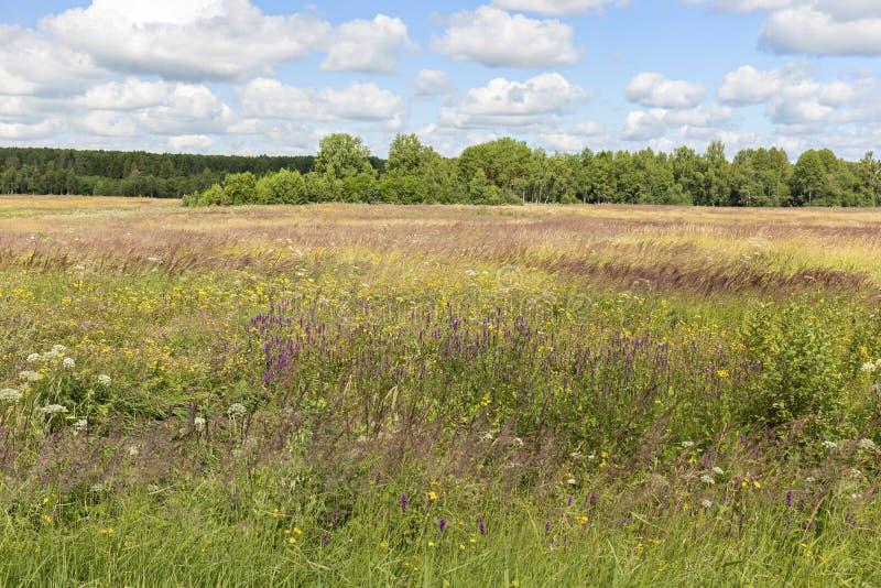 美丽,五颜六色的草甸和蓝色多云天空在一清楚晴朗 免版税库存图片
