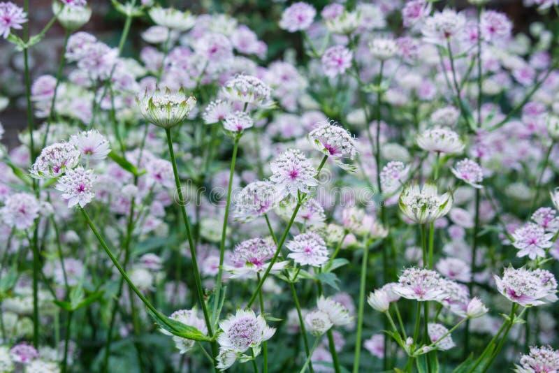 美丽,微妙的花在庭院里开花 免版税库存图片