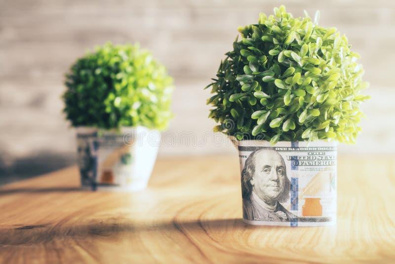 美元植物罐 免版税库存照片