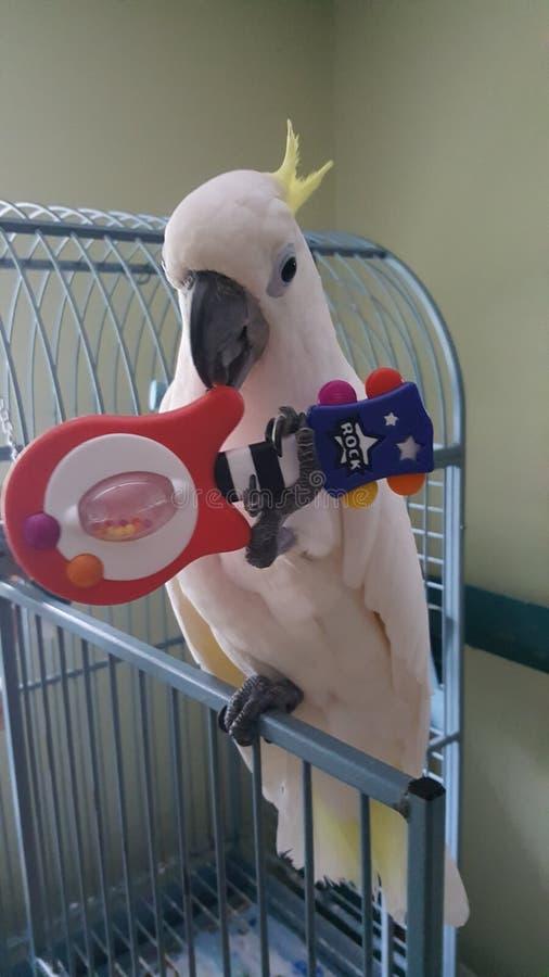 美冠鹦鹉吉他 库存图片