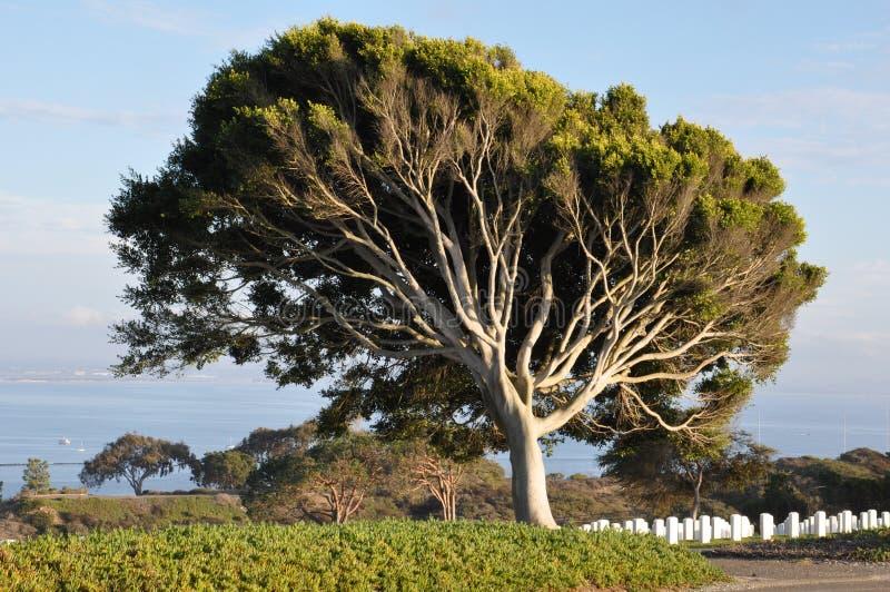 美国军事公墓在圣地亚哥,加利福尼亚 库存照片