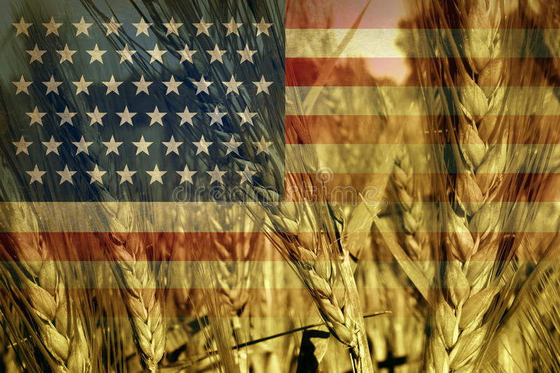 美国农业 库存例证