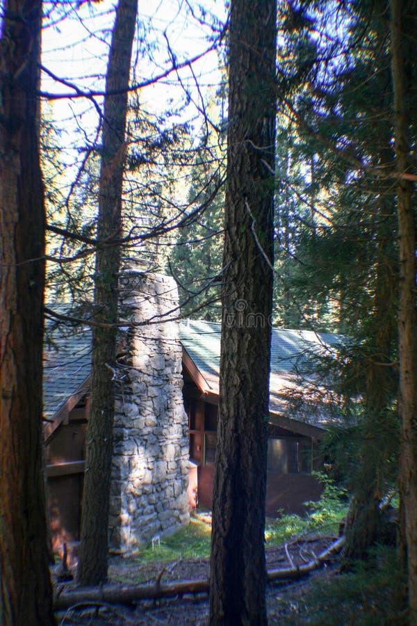 美国加州红杉全国森林公园 图库摄影