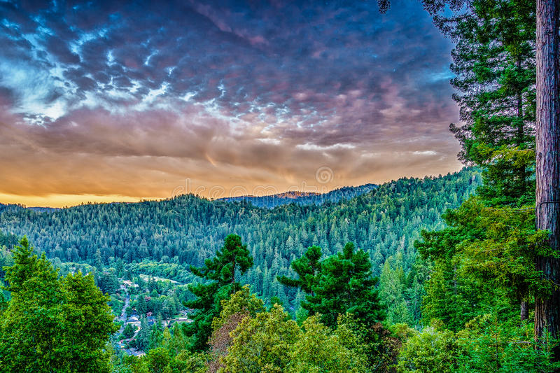 美国加州红杉和杉树在Guernewood公园 免版税库存照片