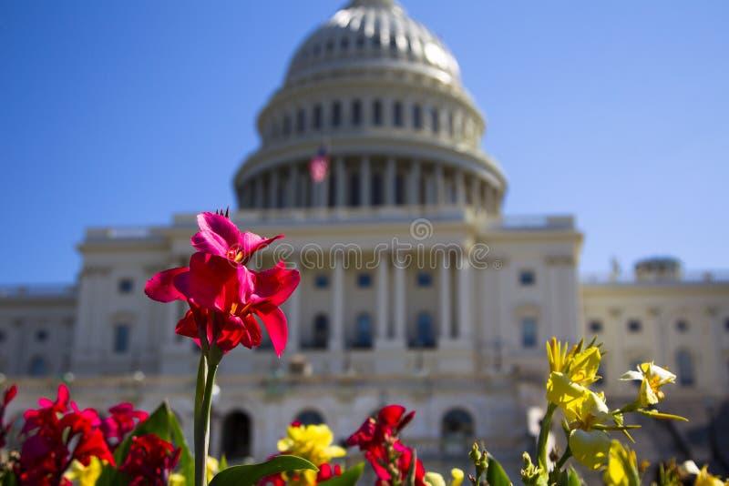美国国会大厦和花 免版税库存图片