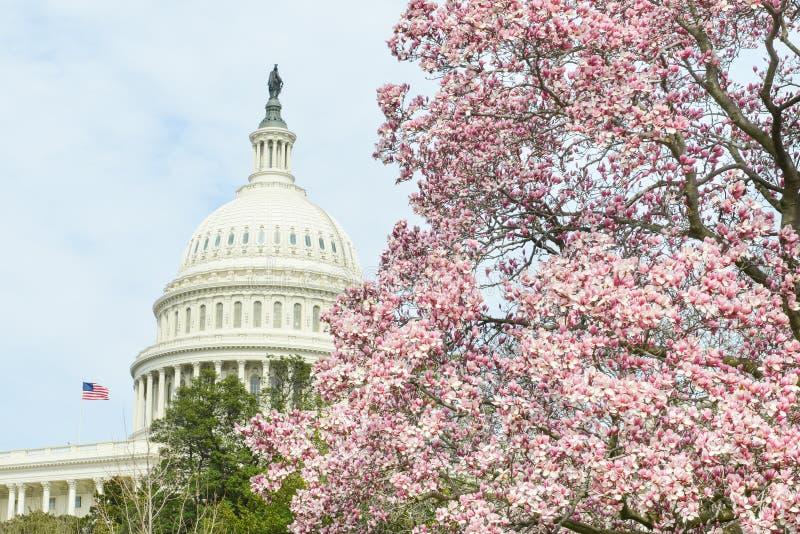 美国国会大厦大厦在春天,华盛顿特区,美国 库存图片