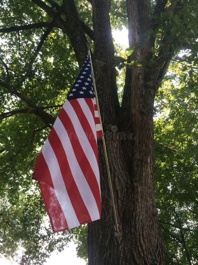 美国国旗在树下 免版税库存照片