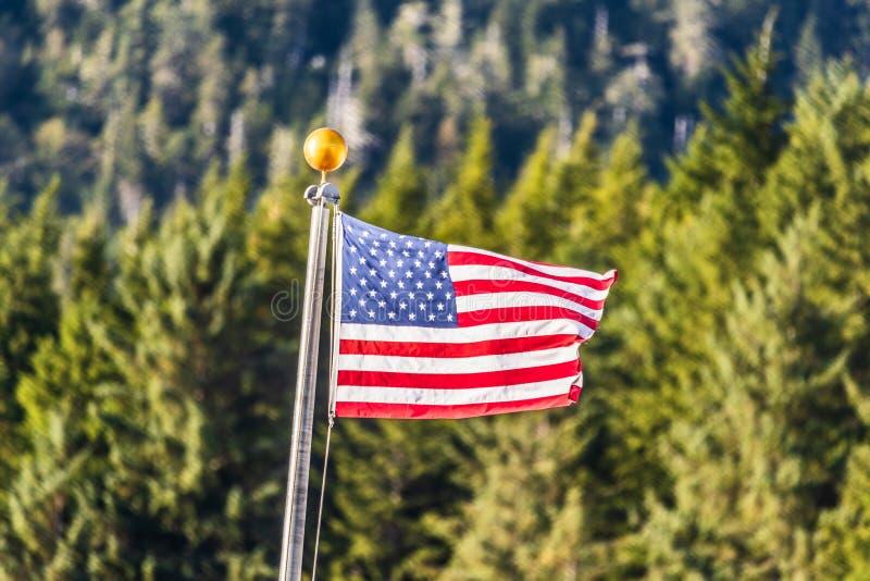 美国沙文主义情绪在森林室外背景 免版税图库摄影