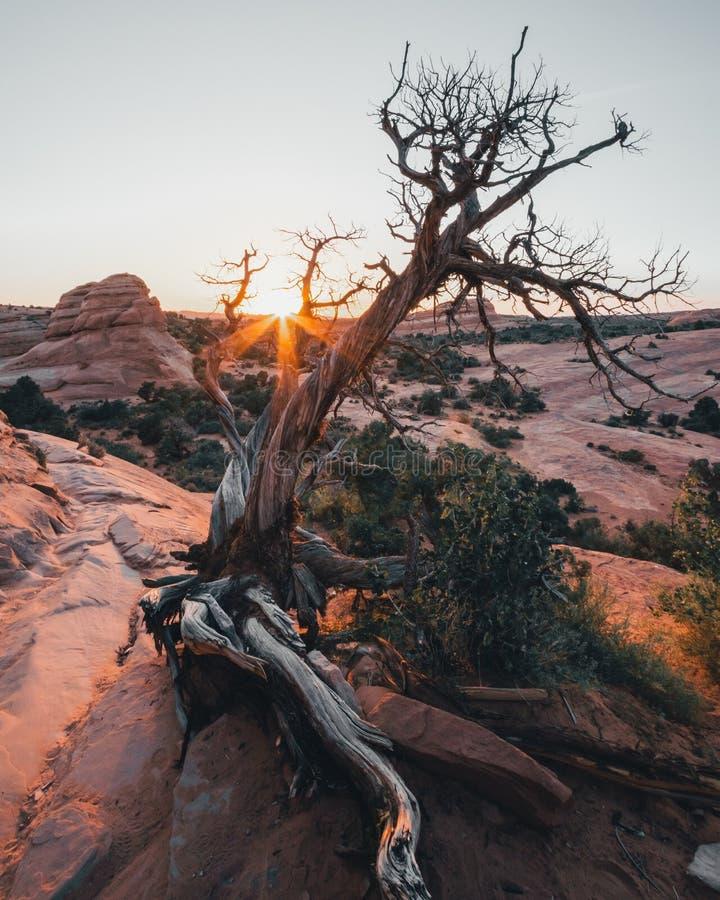 美国犹他州东部Arches国家公园、Pleature Arch、La Sal Mountains、Banced Rock、旅游、旅游 库存图片