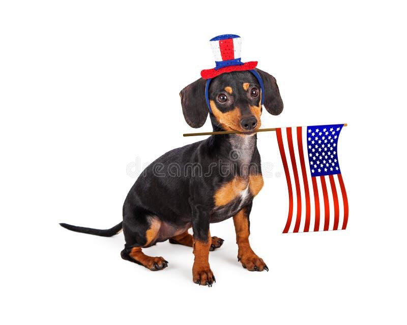美国独立日达克斯猎犬狗 免版税库存照片