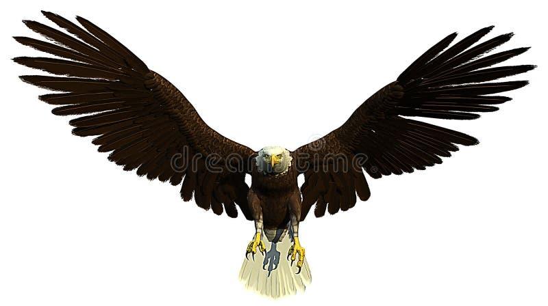 美国白头鹰飞行狩猎 向量例证