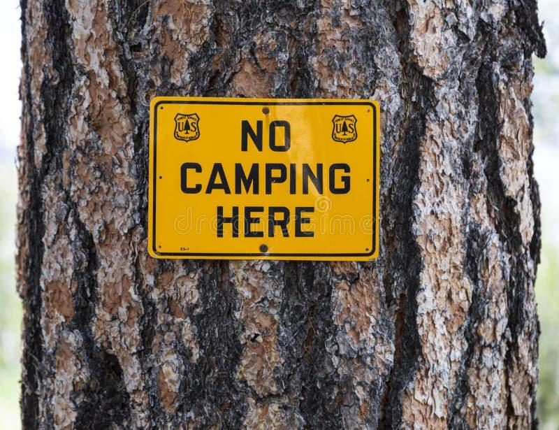 美国美国林业局在杉树的没有野营的标志 免版税库存图片