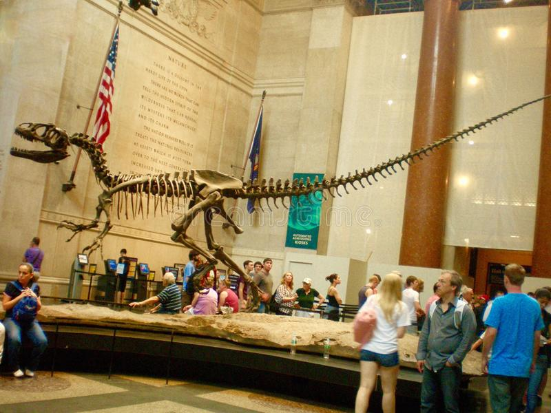 美国自然历史博物馆的游人 库存照片