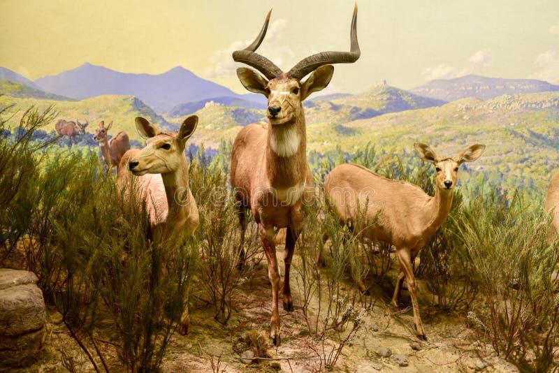 美国自然历史博物馆-纽约 免版税库存图片
