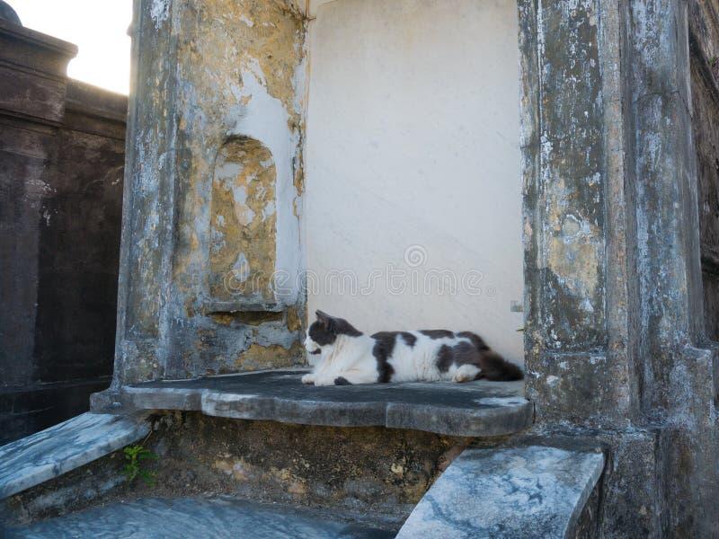美国路易斯安那州新奥尔良圣路易斯公墓1号的一只猫 免版税库存图片