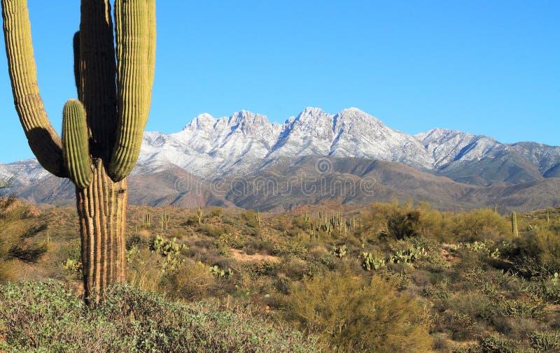 美国,亚利桑那:下雪在四个峰顶/冬天在Sonoran沙漠 免版税库存图片